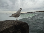 Bird at Niagara Falls